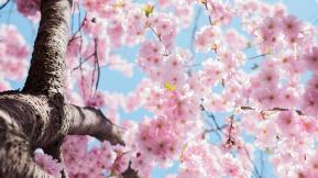 [HR Insight] 2019년 4월호 - 글로벌 CMO(Chief Mindfulness Officer) 포지션을 만든 SAP